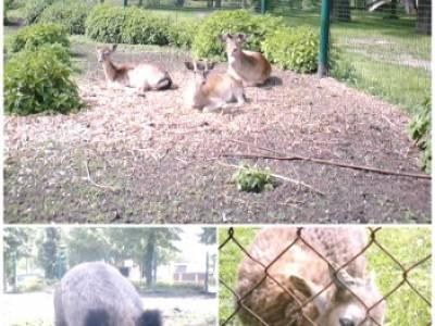 Senfenberger Tierpark